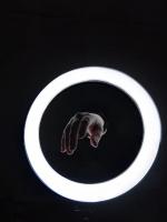 Кольцевая лампа 33 см