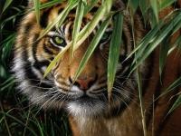 Алмазная мозаика 40х50 Тигр